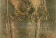 anatomia-dissectia