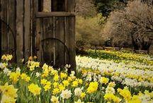 On aime le printemps! / Une saison où la nature renaît et où la chaleur redonne signe de vie.