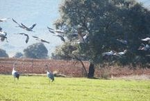 Birdwatching Cabañeros / Itinerarios guiados en la comarca de Cabañeros para el reconocimiento de aves en su entorno #natural