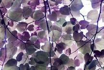 Purple Sensitivity
