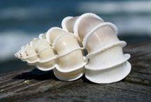 tengeri csigák és kagylók - sea shells