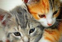 cicusok - kittens