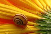 csigák - snails
