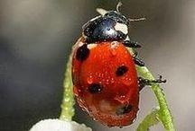 katicák - ladybugs