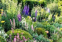 beautiful garden / garden