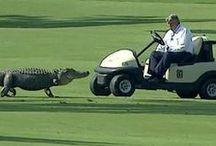 My beloved golf / golf
