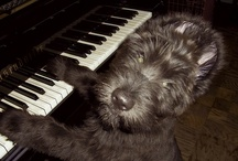 musical dogs