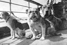 vintage dog photographs / Interesting people and their dogs