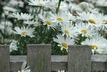 Angoli fioriti / Foto e immagini che possono diventare idee per realizzare un quadro