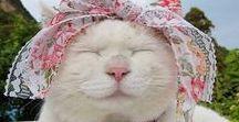 Cats - Γατες