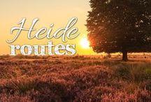 Heide routes / De heide bloeit vroeger dan anders. Waarschijnlijk heeft dat te maken met het warme voorjaar en de zomer. Normaal gesproken komt de heide pas rond half augustus aardig in bloei. Nu, begin augustus, staat het al flink te bloeien. De mooiste heidefietsroutes vind je op http://www.route.nl/fietsroutes/Heide