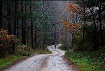 Camino: Olvidado / Camino Olivdado...Camino de Santiago, Spain