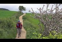 Camino: Films & Videos