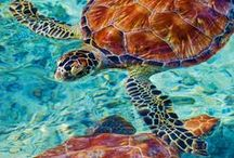 Creatures Great & Small / Air Alliance Houston is the developer and organizer of Earth Day Houston.  Begun in 2005, we celebrate our 10 year anniversary in 2015.  For more information on Air Alliance Houston, please visit www.airalliancehouston.org  Animals - Nature - Plants - Africa - Hawaii - Oceans - Forests - Planet Earth - Earth Day