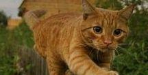 Pisicile Lorenei ! / Cu toti adoram pisicile ( majoritatea ) nu ! Pai daca le adorati abonativa si dati like sa nu uitati ! Va pup pa ! :)