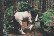 Fuller Fillies Horse Love / Horse Love <3  https://www.fuller-fillies.co.uk/