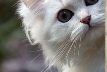 Cats / by Paola Gambetti