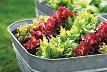 Grow Your Own Produce / These gardens make growing vegetables look chic. Find more inspiration: http://www.bhg.com/gardening/vegetable/vegetables/