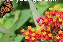 Bloggers' Best Garden Ideas / The best gardening tips and tricks from our Pinning Pros!
