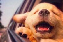 Animals... Ahhhhh