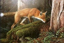 Fox 40 World | Fox Illustrations / Beautiful and stunning illustrations of our beloved Fox by many talented artists!