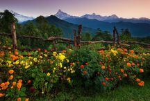 garden / 庭、ガーデニング、花など