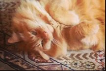 Adventures of Aslan / My golden kitty