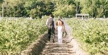 """DiMeo Farm Wedding Venue / DiMeo Farms hosts outdoor-only New Jersey farm weddings at our gorgeous rustic farm wedding venue location in New Jersey at the DiMeo Blueberry Farm in Hammonton. Let's reconnect your entire family with our local South Jersey farm, get to """"know your farmers"""" and support buying local. Get married in our blueberry fields in the Pine Barrens. Take a self walk-through tour of our gorgeous South Jersey blueberry farm wedding venue location. CALL NOW (609) 561-5905 to get all wedding pricing details."""