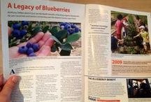 DiMeo Farms Media Articles / All types of media love to feature DiMeo Farms, our family blueberry farm, blueberry plants nursery, u-pick blueberry farm and rustic farm wedding venue location for all types of blueberry news. The media often goes to DiMeo because of our expertise in the blueberries industry. We appreciate your blueberry, berry plants and pick your own blueberries operation: (609) 561-5905
