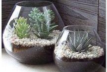 jardins d'intérieur /terrarium