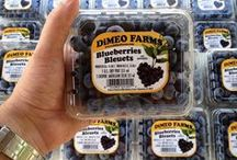 DiMeo Blueberries / DiMeo Farms sells the better tasting Non-GMO, NATURALLY GROWN, Heirloom blueberries direct from our family blueberry farms in New Jersey. CALL NOW (609) 561-5905 to buy the best blueberry plant varieties so you can grow your own organic blueberries at home. Remember, we also sell raspberry, thornless blackberry plants, cranberry plants, strawberry plants and aronia berry bushes as well.