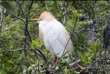 Blue Heron River Tours....Florida Naturally / A peek into the beauty of the St. Johns River and the Hontoon Dead River.