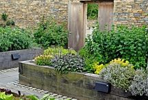 Herb  & Container Gardens /  . / by Nancy In Napa