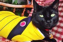 *❤️LUCAS STITCH   ^.^ / Fotos de Lucas Stitch el gato más lindo......porque? Porque es mío❤️ y lo acompañan algunos amigos!