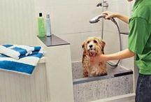 Pet Showers / #pet #showers #dog #baths #mudrooms