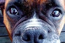 Protect animals / Hayvanlar için destek-protect animals-