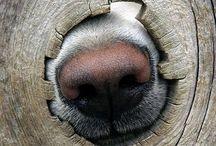 Adorable Dogs / Leuke foto's