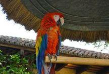 Guatemala - Antigua - Casa Santo Domingo / Mes voyages