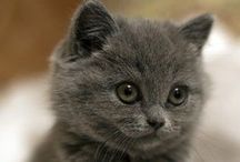 Cats / Cute kitties.