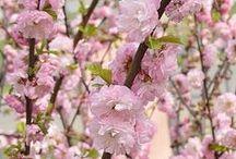 My flowers - Virágaim / A kertemben lévő virágok - saját készítésű fotókkal.