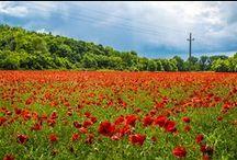 Nyár, virág - Summer, flower