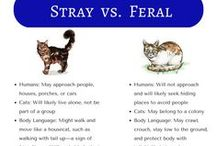 Feral Cat Awareness / Feral cats differ from stray or pet cats.  They may be the same species but their behaviors towards humans and other cats are different. There is a group dedicated to feral cat support.  Learn more at http://www.alleycat.org/