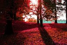 ..AUTUNNO.. / Mattino d'autunno    Che dolcezza infantile  nella mattinata tranquilla!  C'è il sole tra le foglie gialle  e i ragni tendono fra i rami  le loro strade di seta.  Federico Garcia Lorca / by a lady with a cat
