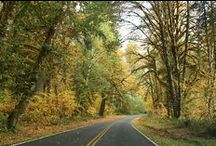 Fall on the Olympic Peninsula / Autumn on the Olympic Peninsula is the perfect time to fall in love with fall!  A plethora of festivals and events celebrating the foods, wines, ciders, wildlife, and people abound in those rich colors we love about the season.