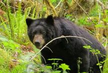 Flora & Fauna of the Olympic Peninsula / Finding inspiration in the natural world around us.
