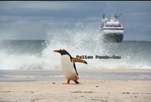 Falkland Islands / Scenery & Tourist attractions in Falkland Islands