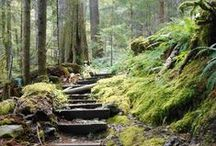 Hiking & Backpacking on the Olympic Peninsula