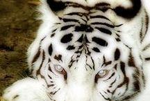 BIAŁE / albinosy
