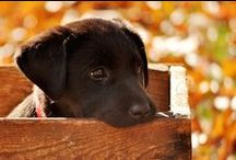 so cute / by Gloria Baker