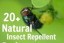 GETTING RID OF PESTS / by Danielle Mulkey